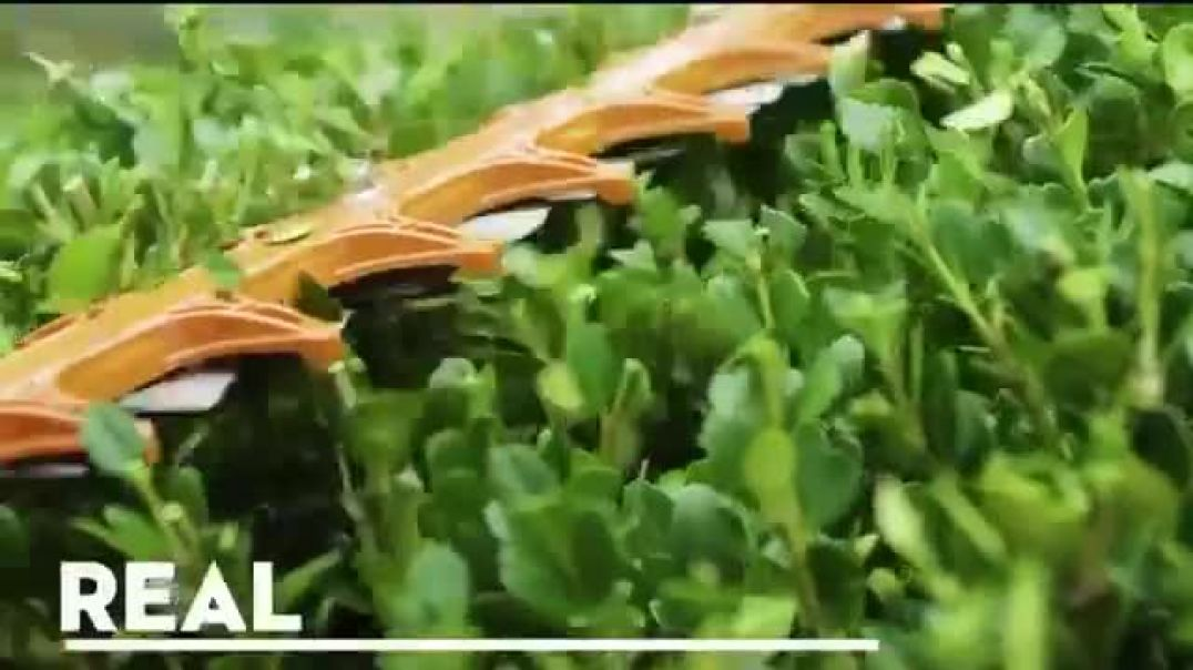 STIHL Real Grass Trimmers and Handheld Blowers Commercial 2019