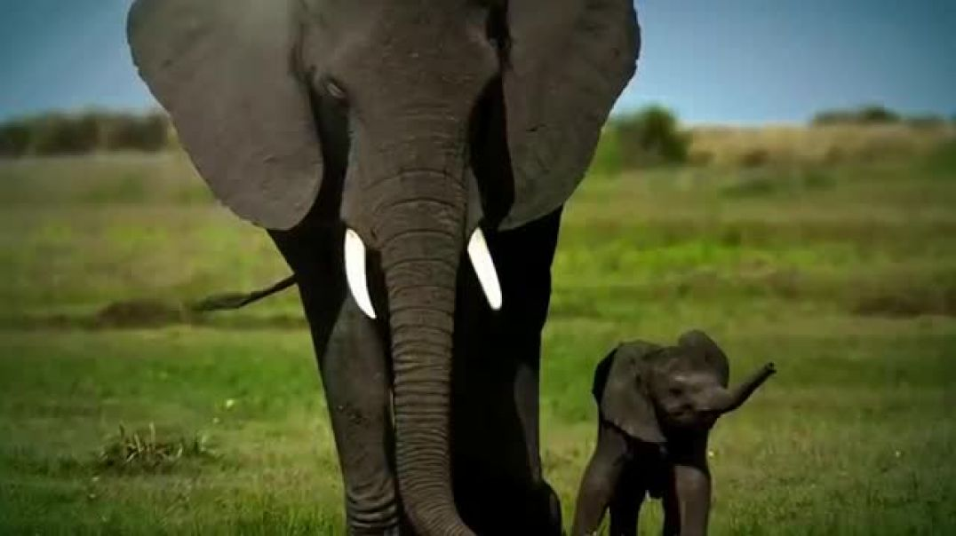 World Wildlife Fund TV Commercial Ad Elephants Commercial 2019