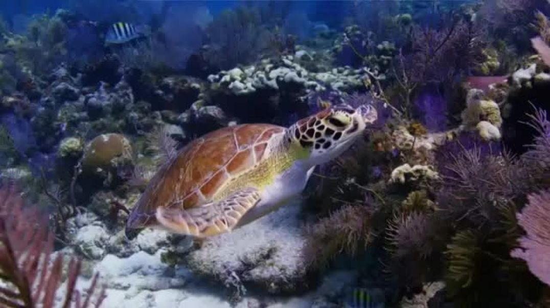 Watch World Wildlife Fund TV Commercial ad, Sea Turtles