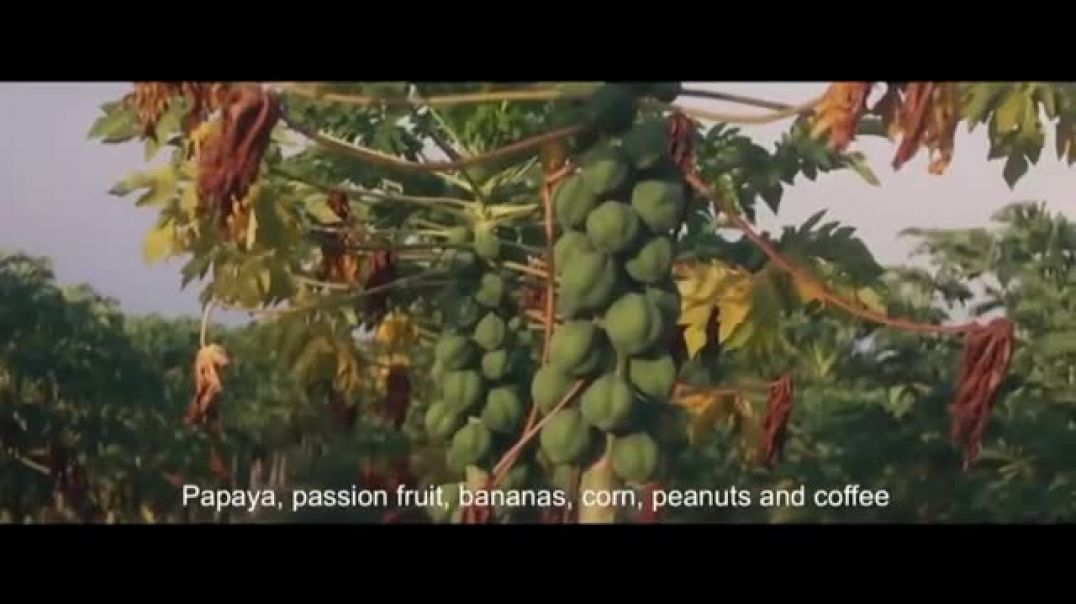 Watch Visit Angola TV Commercial Ad, Quality Crops