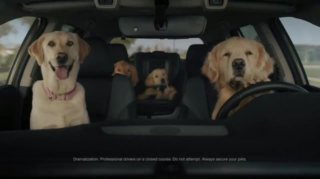 Watch 2020 Subaru Outback TV Commercial Ad, Dog Tested No Pets Allowed