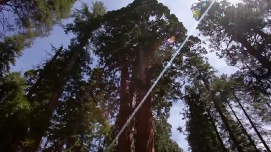 Arbor Day Foundation TV Commercial Ad, Now More Than Ever.mp4