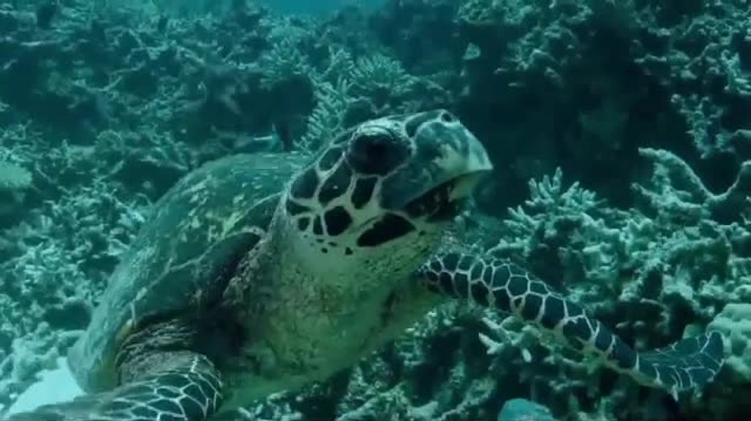 Tennis Warehouse Adidas Parley TV Commercial Ad Play for the Oceans Featuring Sascha Zverev.mp4