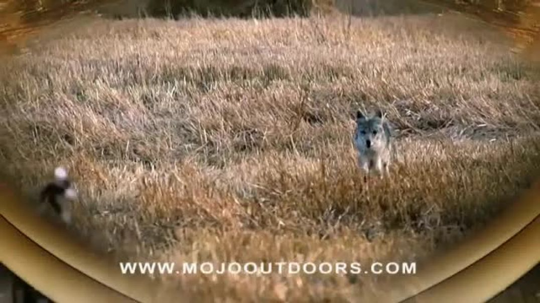 Mojo Outdoors TV Commercial Ad Up Close and Personal.mp4