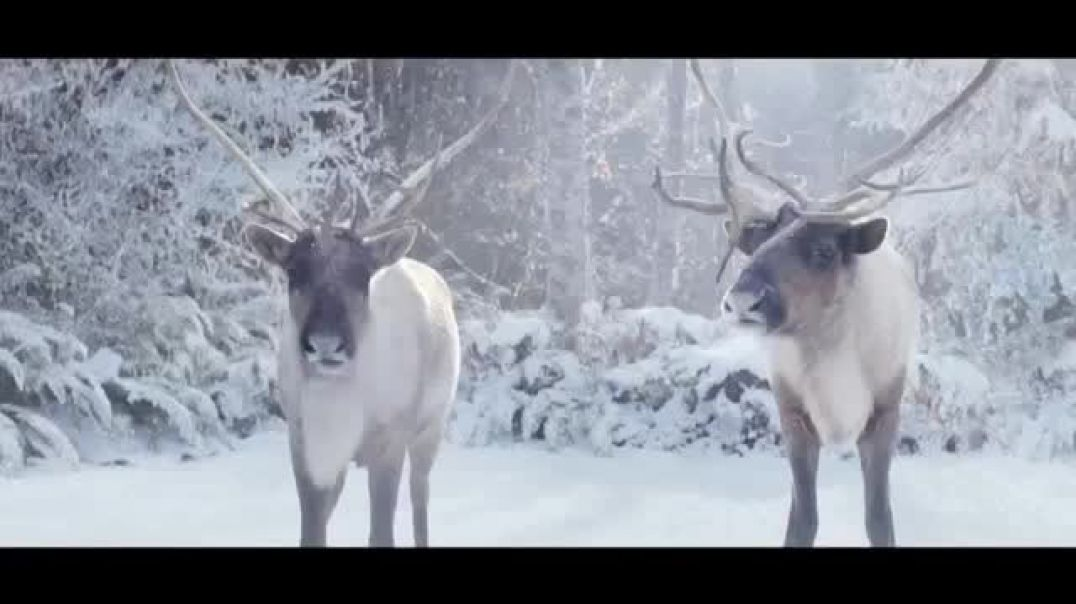 Microsoft TV Commercial Ad, Holidays You Dont Look Like a Larry $200 Off Surface.mp4