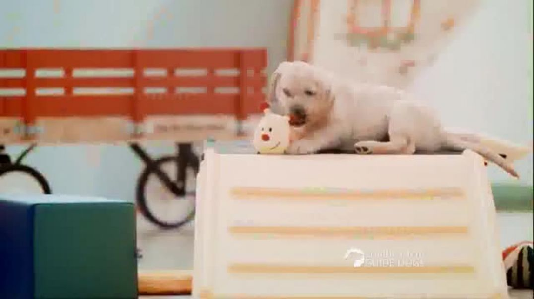 Southeastern Guide Dogs TV Commercial Ad, One Lucky Puppy Sponsor a Puppy for $19 a Month.mp4