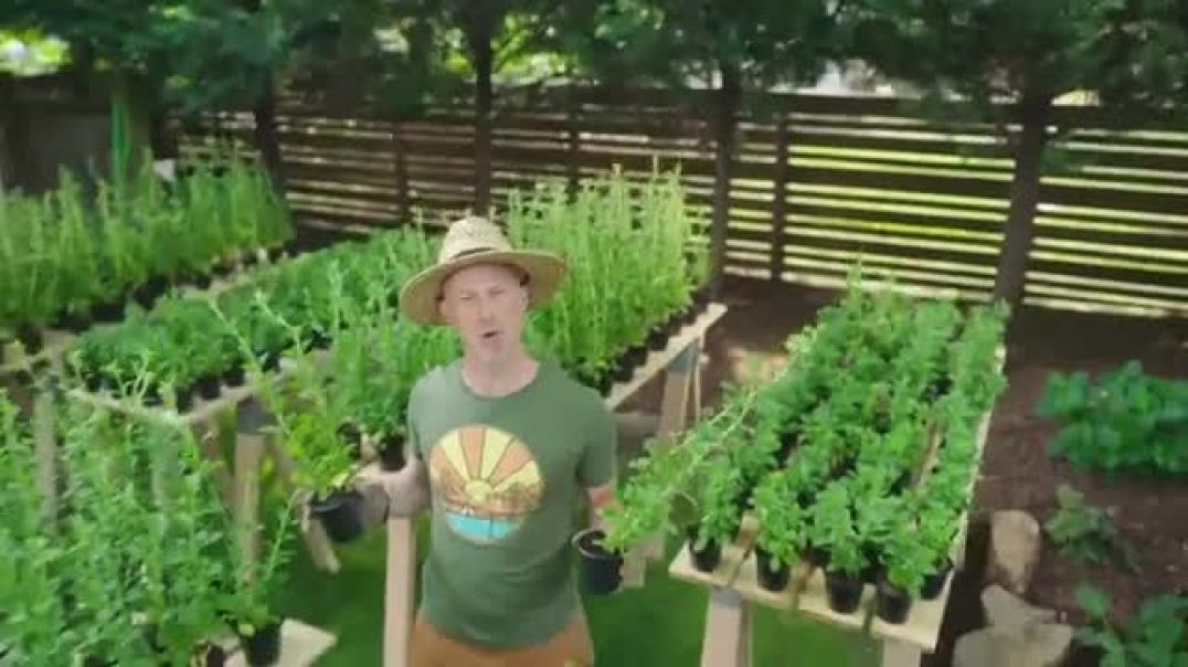 Splenda Stevia TV Commercial Ad, Sweetest Thing You Could Grow.mp4