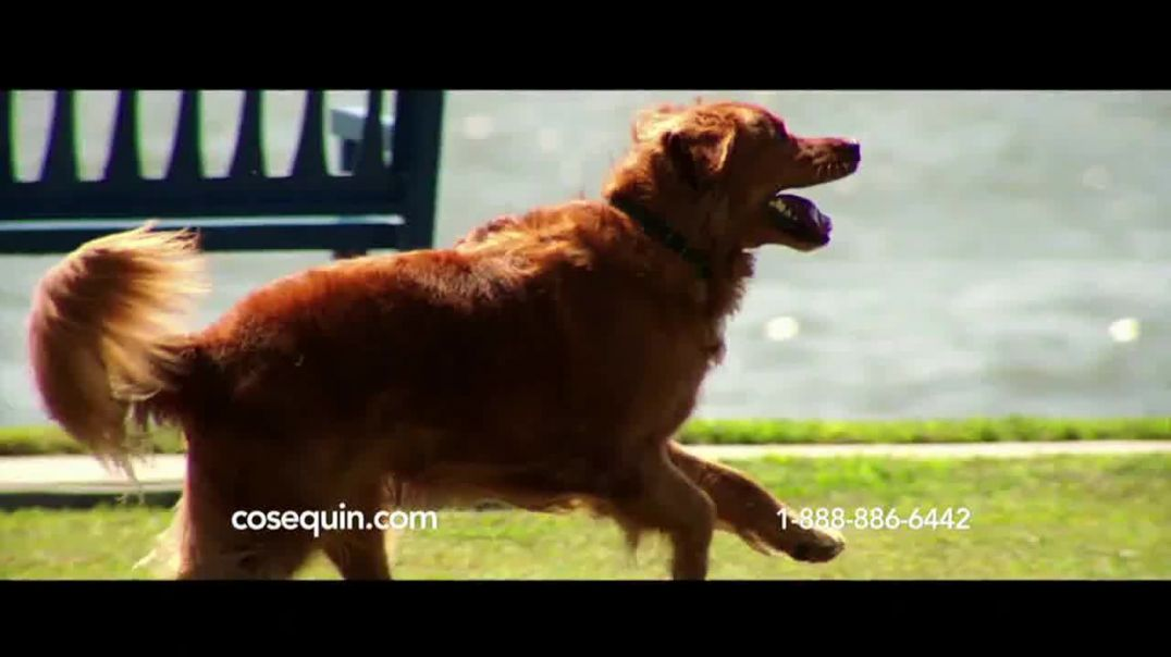Cosequin TV Commercial Ad, Joint Health Support for Veteran Service Dog.mp4