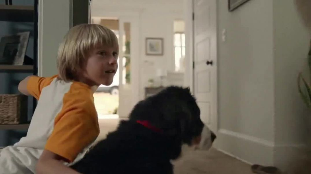 The Home Depot TV Commercial Ad, Filled With Memories Official Carpet of the Westminster Kennel Club