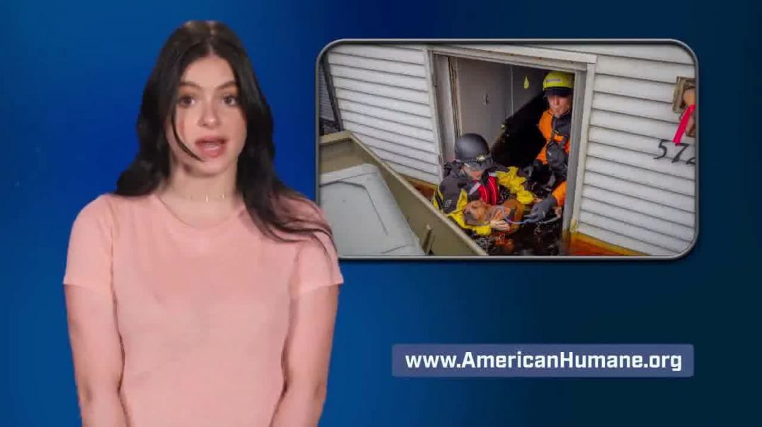 American Humane TV Commercial Ad, Family Featuring Ariel Winter Advert 2020