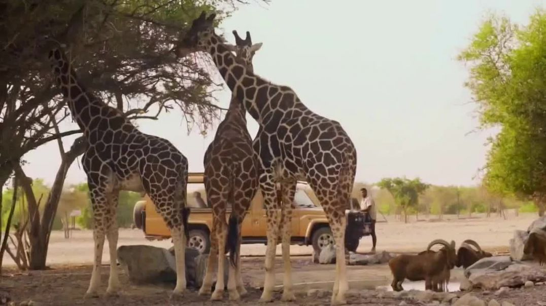 Abu Dhabi TV Commercial Ad, Sir Bani Yas island Advert 2020