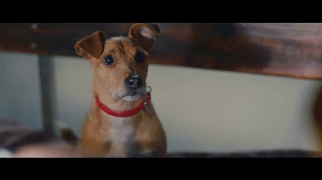 Purina TV Commercial Ad 2020, Every Detail