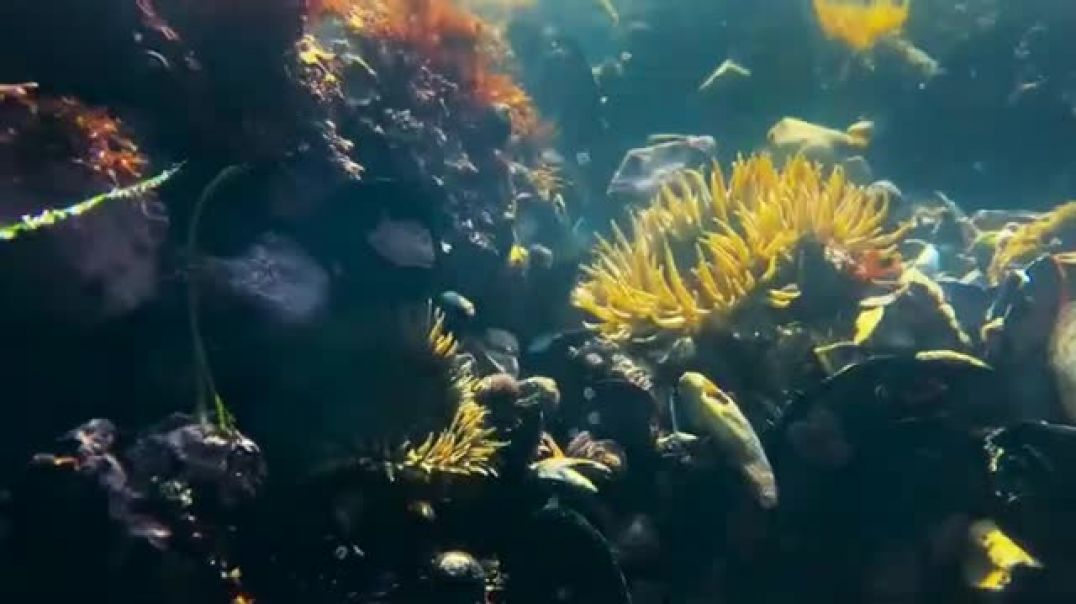 Subaru Outback TV Commercial Ad 2020, National Geographic Adventure Photographer