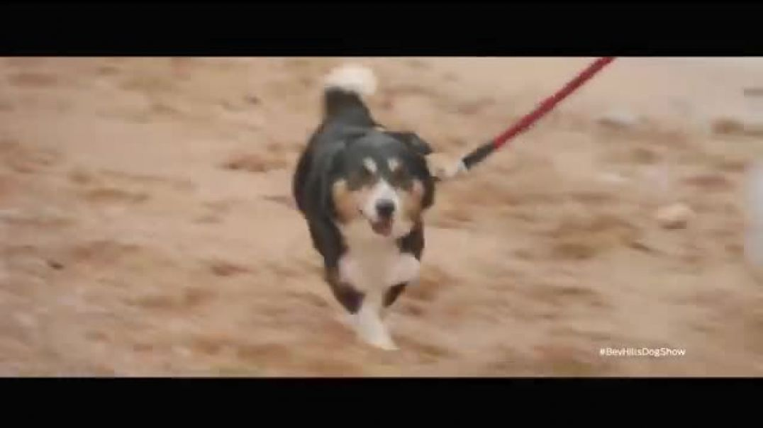 Purina TV Commercial Ad 2020, Purina Cares  Nutrition and Sustainability