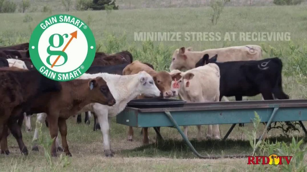 Gain Smart TV Commercial Ad 2020, Healthy and Profitable Cattle