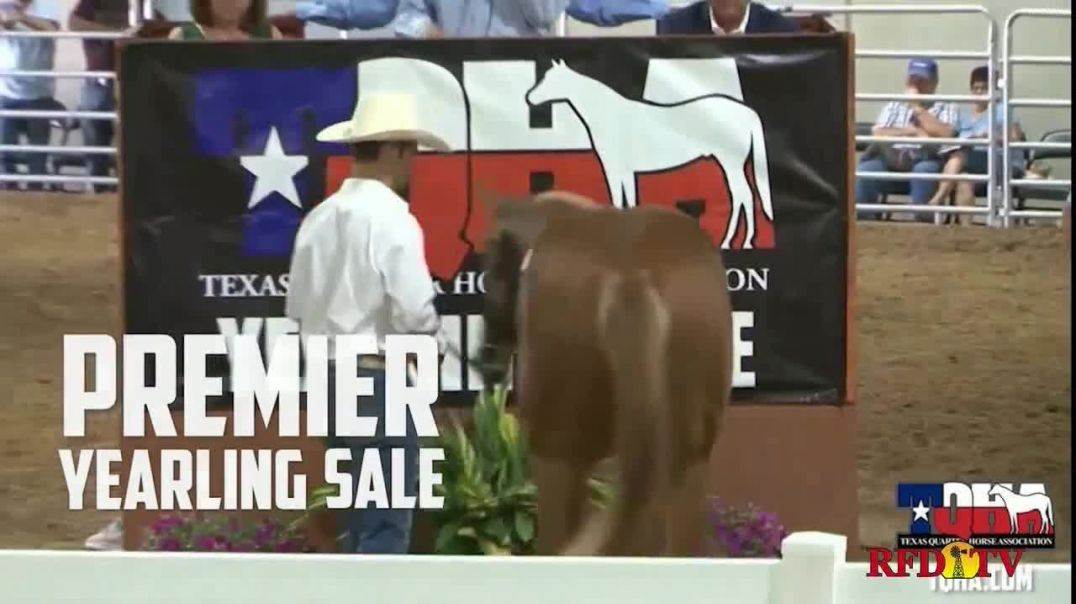 Superior Livestock Auction Yearling Sale TV Commercial Ad 2020, Texas Quarter Horse Association- Pre