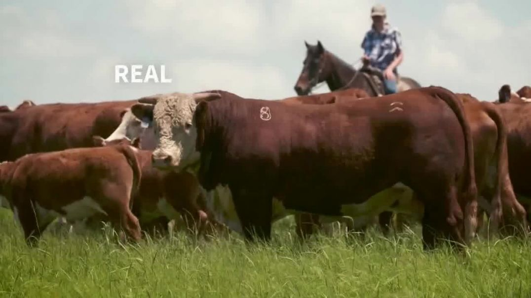 American Hereford Association TV Commercial Ad 2020, More Pounds, More Profit