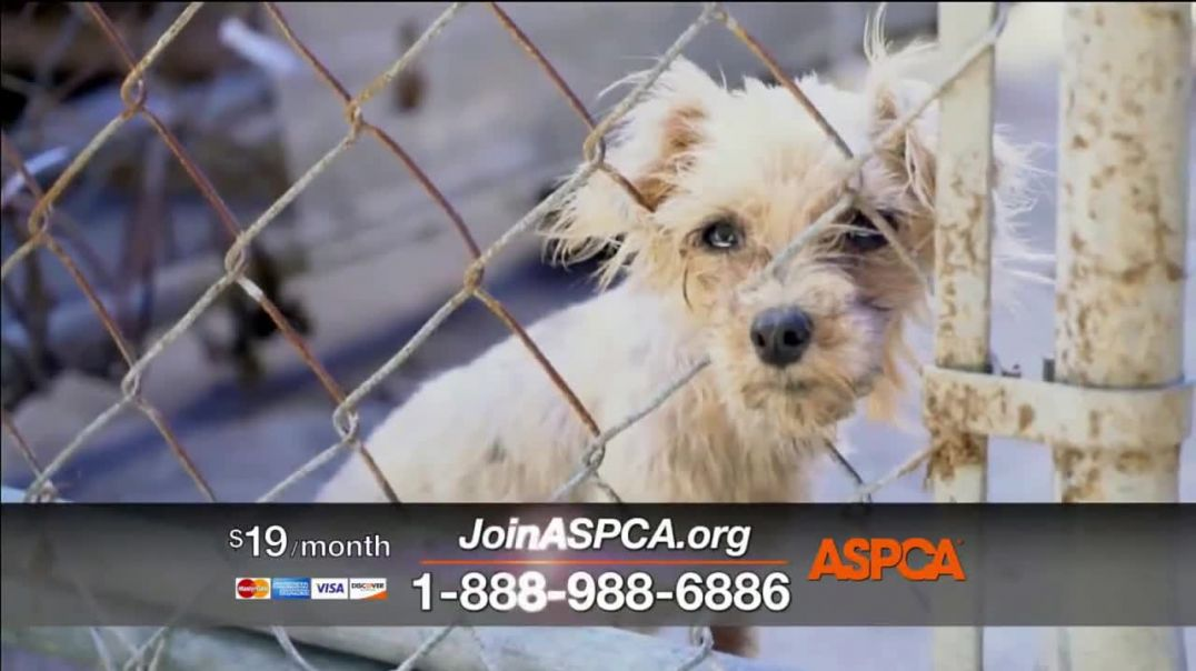 ASPCA TV Commercial Ad 2020, Save Animals from the Summer Heat