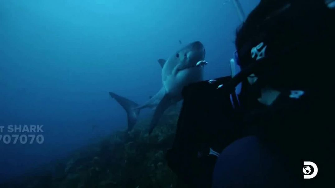 Oceana TV Commercial Ad 2020, Shark Week- Need Our Help Featuring Nina Dobrev