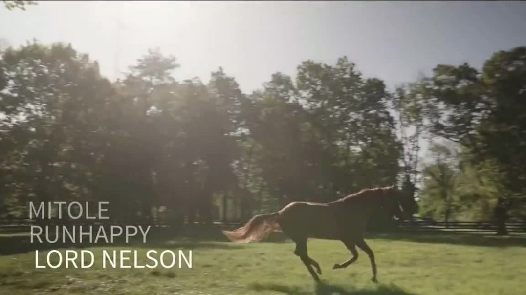 Spendthrift Farm TV Commercial Ad 2020, Lord Nelson- Pulpits Last Great Son