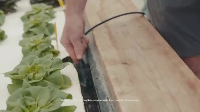 Fiverr TV Commercial Ad 2020, Transformation Stories Greener Roots
