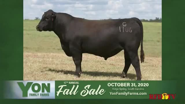 Yon Family Farms 17th Annual Fall Sale TV Commercial Ad 2020, Look No Further