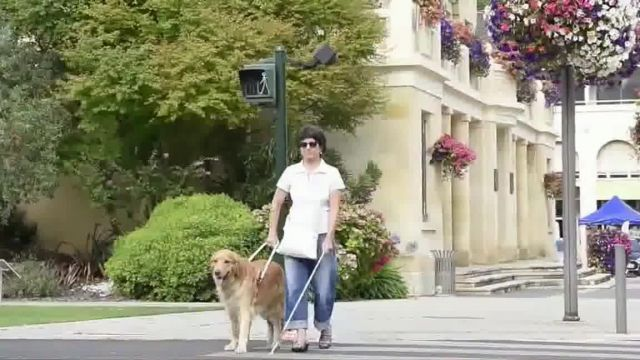 AKC Pet Insurance TV Commercial Ad 2021, Keep Your Pet Healthy