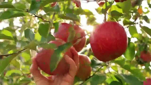 Balance of Nature TV Commercial Ad, Scientifically Formulated