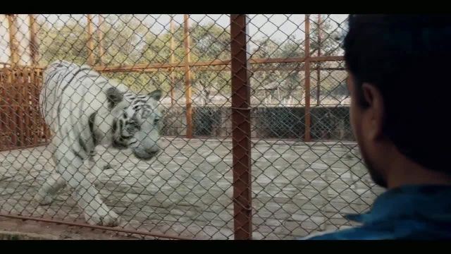 Netflix TV Commercial Ad 2021, The White Tiger' Song by Queen
