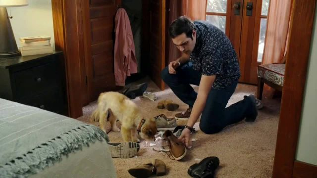 GEICO TV Commercial Ad 2021, Puppy Bowl- Trouble