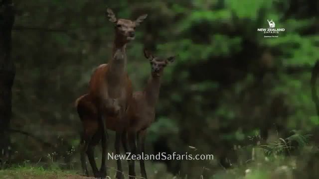 New Zealand Safaris TV Commercial Ad 2021, Thrill and Excitement