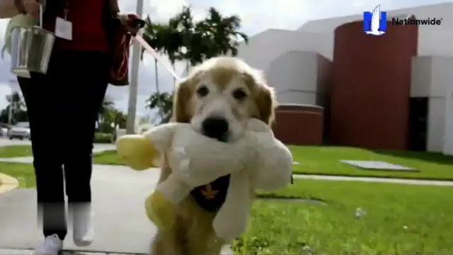 Nationwide Pet Insurance TV Commercial Ad 2021, AKC Heroes