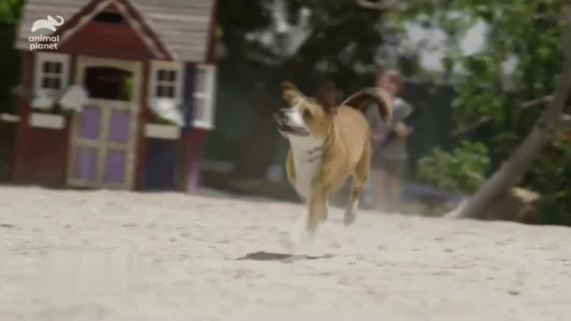 Resolve Pet Expert TV Commercial Ad 2021, Animal Planet- Champion